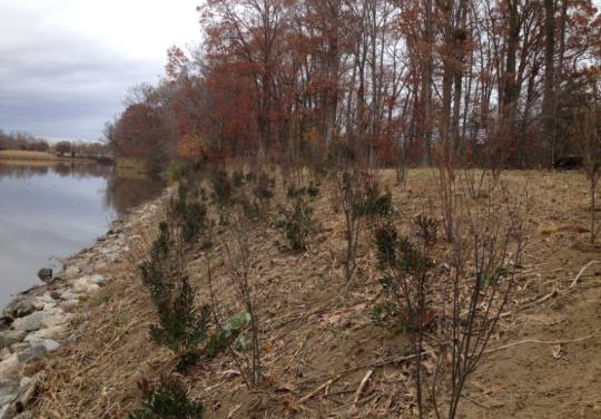Slope Stabilization of St Jones Riverbank by Mission Support Services